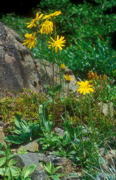 Botanikus Mit Wenig Geld Den Garten Verschönern